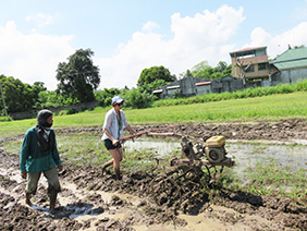 plowing a rice field