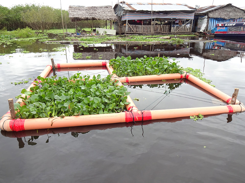 photo of a water hyacinth test