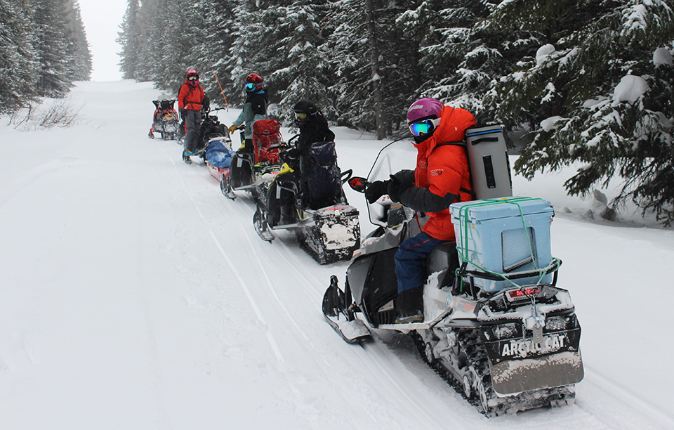 Researchers on snowmobiles