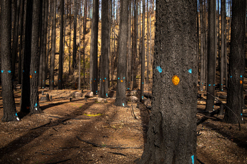Trees marked with blue and orange dots